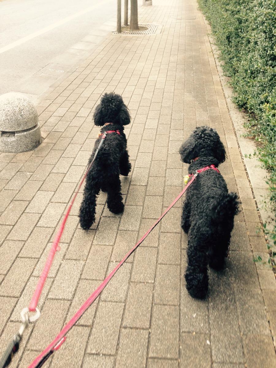 201628ルナリーナ散歩