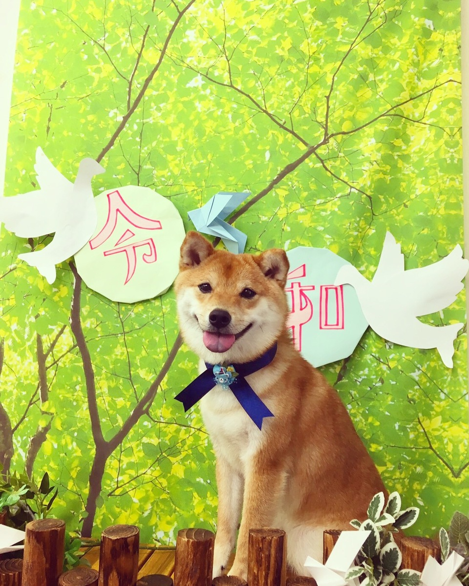 2019514幸太jr